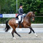 Nicky Star met haar Grand Prix paard Wendel helpt jou, samen met het hele team op weg naar jouw droomdoel!